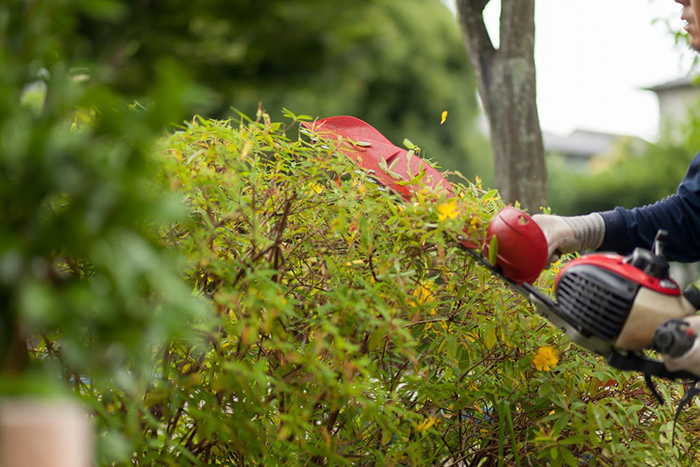 庭の剪定をしている職人